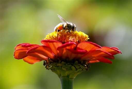 ZomBee Watch helps scientists track honeybee killer
