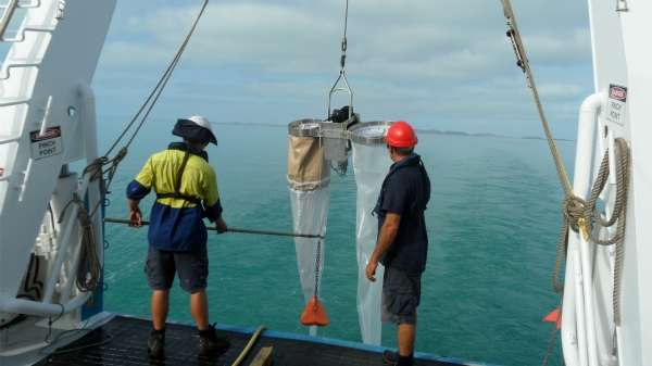 Zooplankton growth rates key to low fish numbers