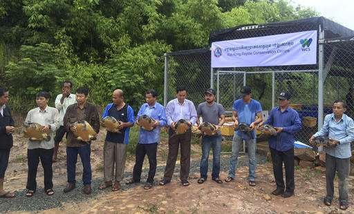 206 of Cambodia's rare royal turtles released at new center