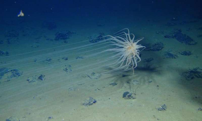 Abundant and diverse ecosystem found in area targeted for deep-sea mining