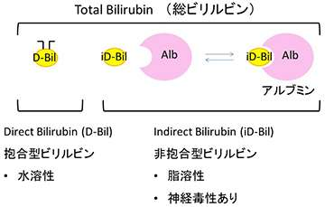 A fluorescent protein from Japanese eel muscles used to detect bilirubin in newborns
