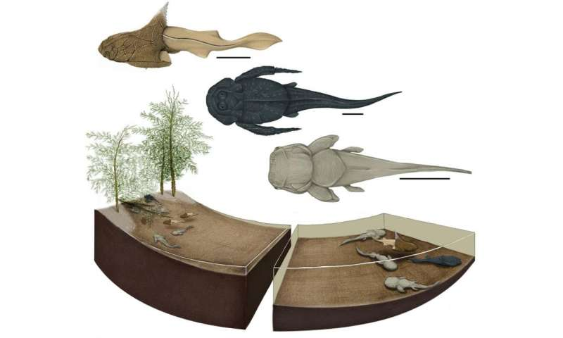 Ancient fishes kept their young in a nursery