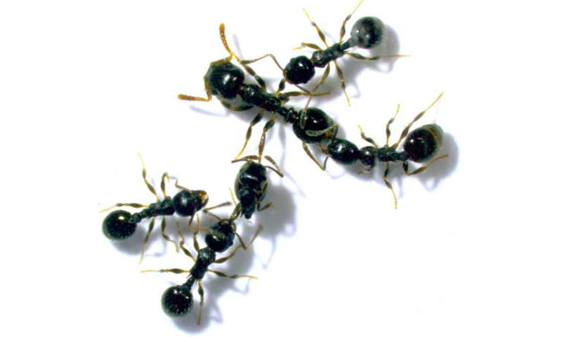 Ant colonies that are highly specialized have lower chances of survival when sudden changes occur