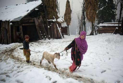 A Pakistani Kashmir girl is seen pulling a sheep in the snow-covered Neelum Valley