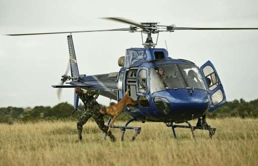 A rapid response team of armed rangers in the Ol Pejeta private reserve travel by helicopter to track down poachers
