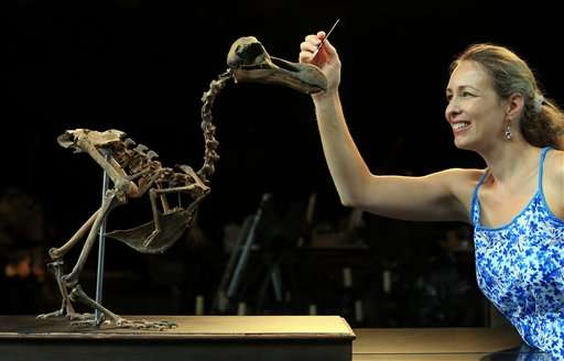 Auction house to sell composite skeleton of a dodo bird