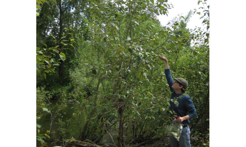 Bacteria in branches naturally fertilize trees