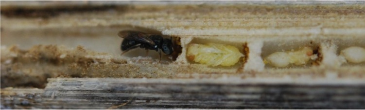 Bee populations expanded during global warming after the last Ice Age