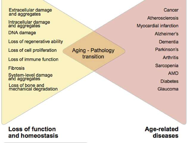 Biogerontology Research Foundation calls for a task force to classify aging as a disease