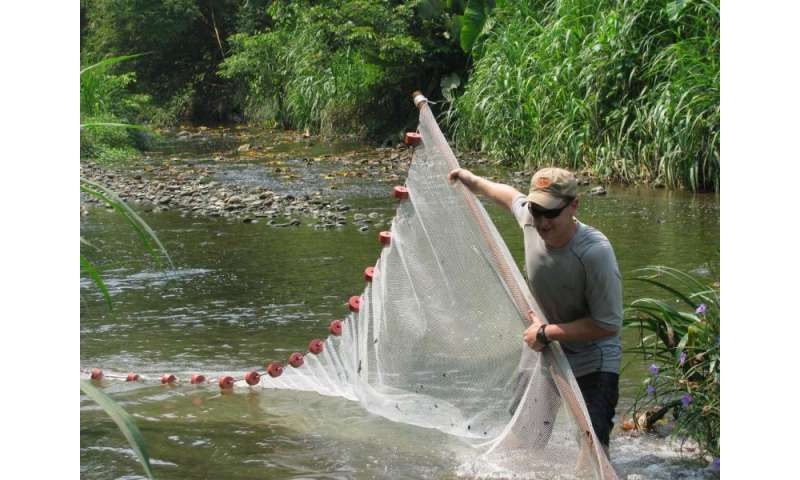 Biologists find genetic mechanism for 'extremophile' fish survival