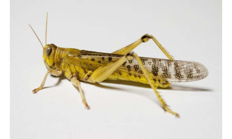 Biomechanics team discovers how insects repair their 'bones'