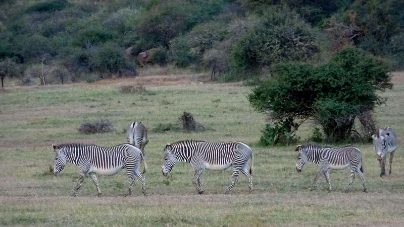 Bringing people together as scientists to save a zebra species