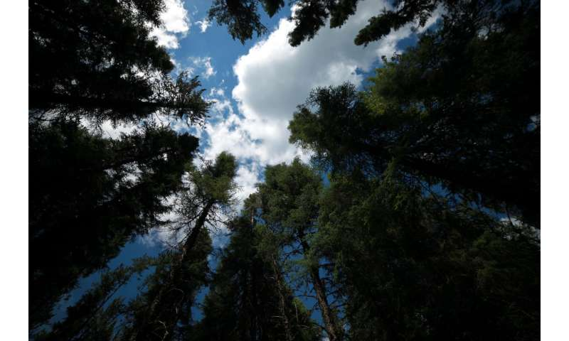 Canadian forests a refuge as warming creeps north