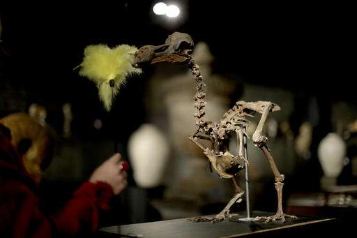 Composite skeleton of Dodo bird to be auctioned