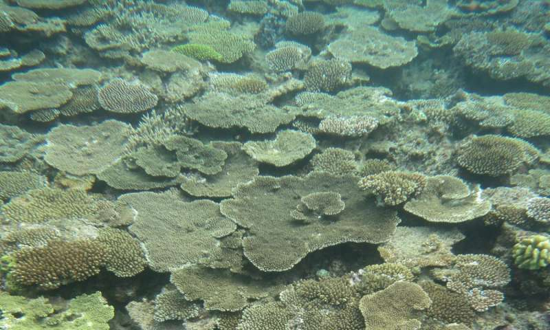 Coral mass spawning triggered by seasonal rises in ocean temperature