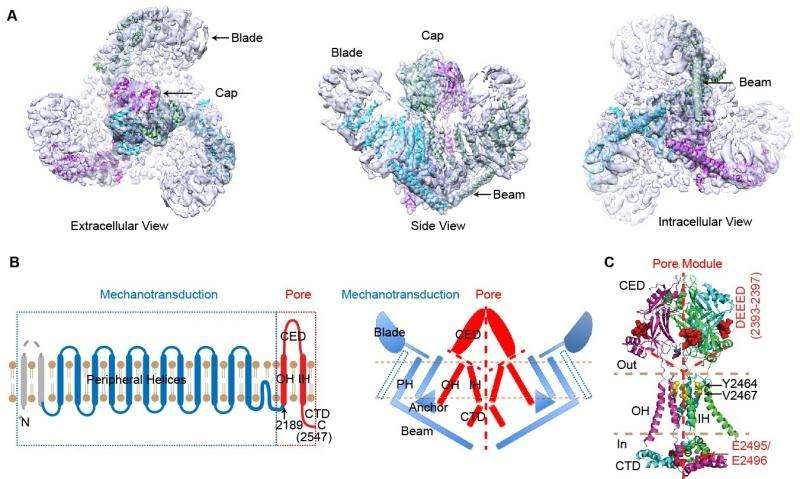 Demystifying mechanotransduction ion channels