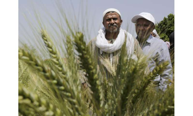 Egypt looks to avert water crisis driven by demand, waste