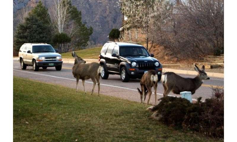 Expanding development associated with declining deer recruitment across western co.