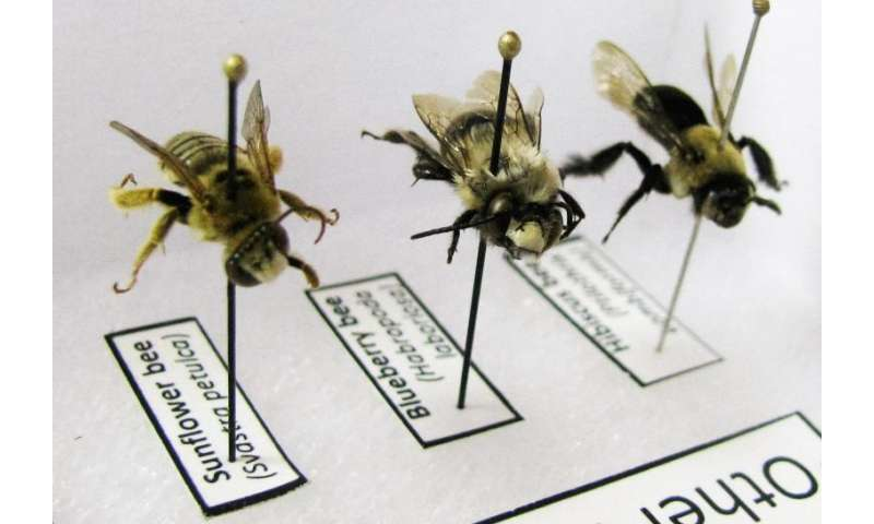 Expanding outreach to support bees and other pollinators
