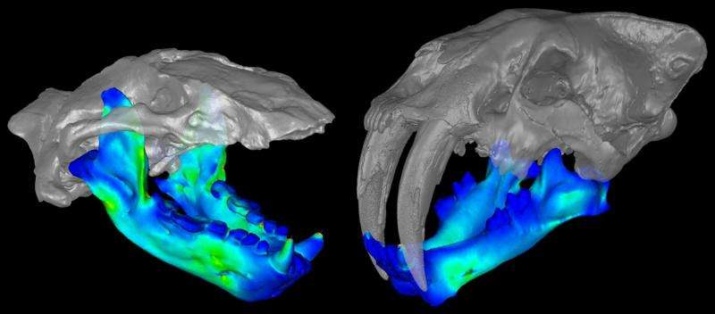 Extinct otter-like 'marine bear' might have had a bite like a saber-toothed cat