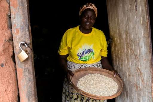 Fillies Muromo holds a basket full of drought and heat tolerant maize from her dry field in the Zaka Masvingo province, on Octob