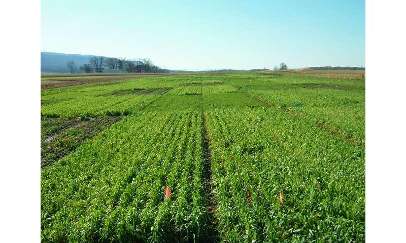 El primer estudio de su tipo sugiere que las mezclas de cultivos de cobertura aumentan los servicios del agroecosistema