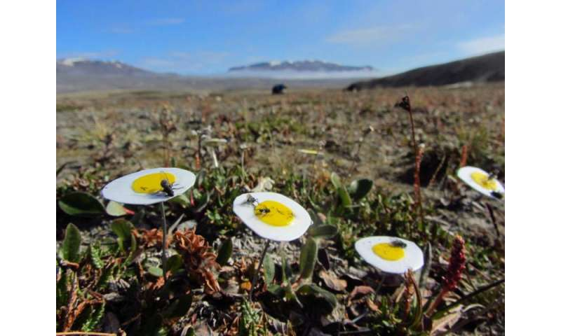 Flies are the key pollinators of the High Arctic