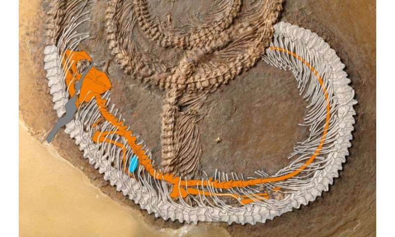 Fossil food chain from the messel pit examined