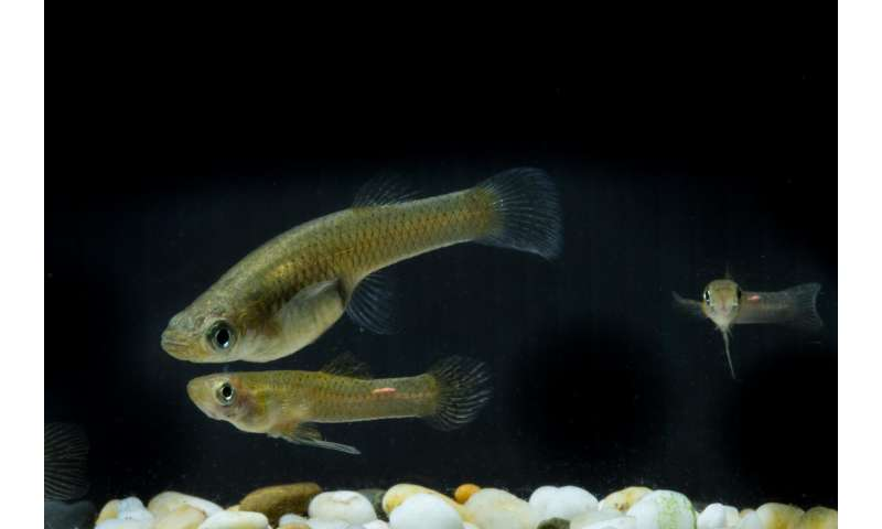 Genital size doesn't matter -- for fish