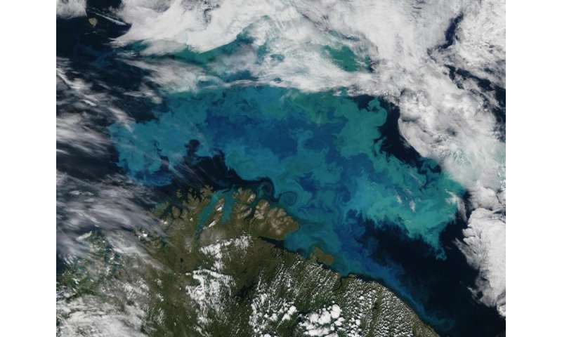 Giant algal bloom sheds light on formation of White Cliffs of Dover