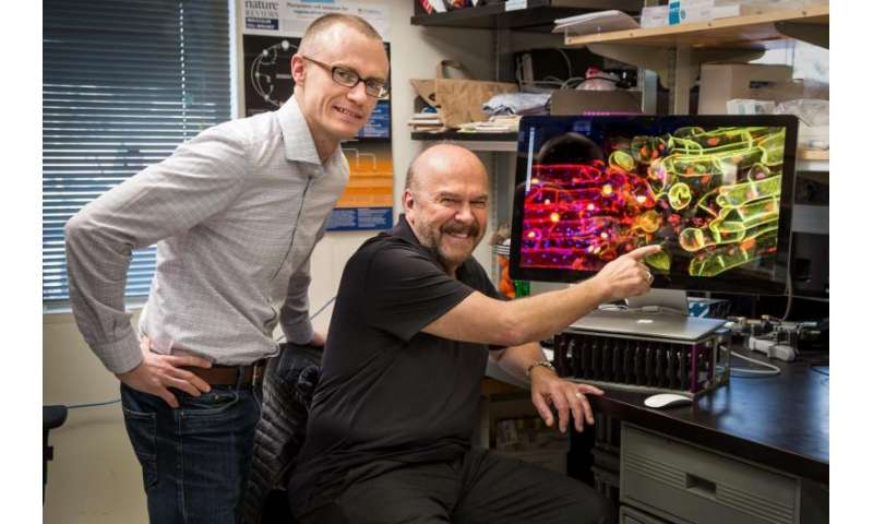 Grafted plants' genomes can communicate with each other