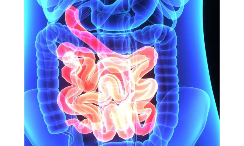 Gut microbiome diversity lower in chronic pelvic pain syndrome