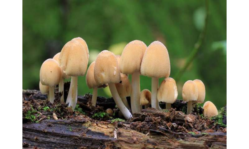 Hijacked cell division helped fuel rise of fungi