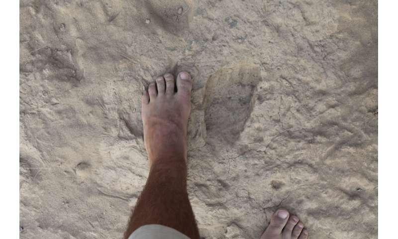 Homo erectus walked as we do