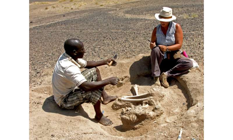 Hunter-gatherer massacre suggests groups of humans waged war earlier than we thought