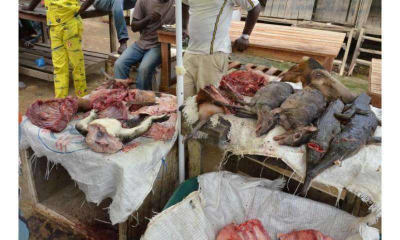 Hunting pressure on forest animals in Africa is on the increase