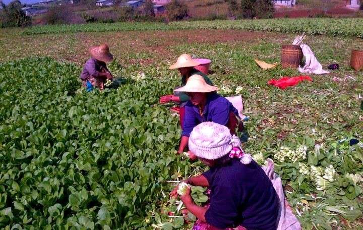 Increasing sustainable food production could empower Cambodian women