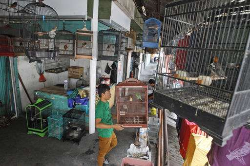 Indonesia urged to take stern action on illegal bird trade