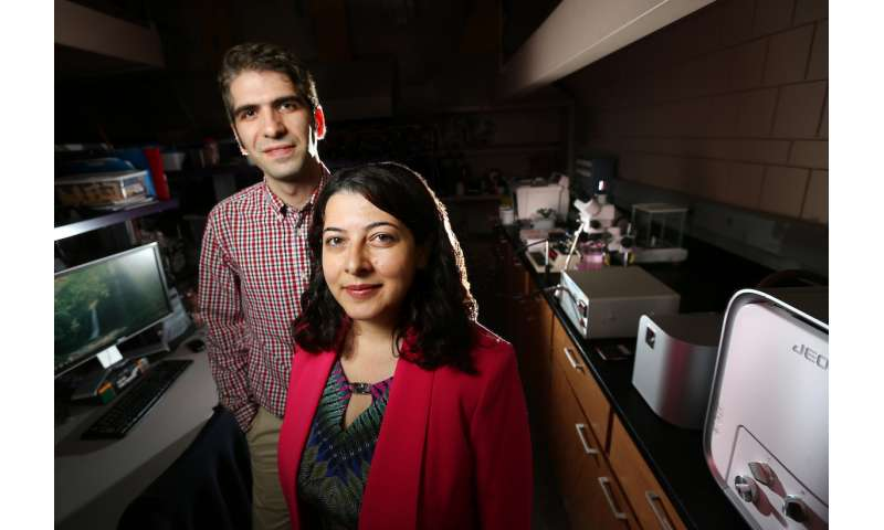 Iowa State researchers fabricate microfibers for single-cell studies, tissue engineering