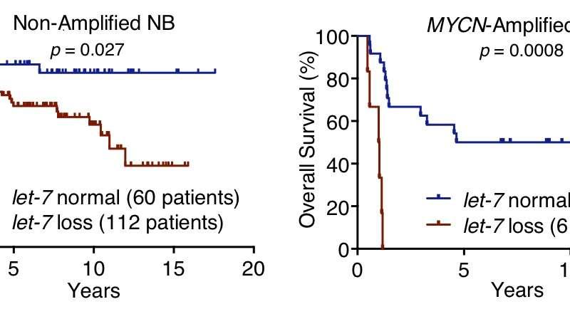 Loss of a microRNA family, let-7, found key in neuroblastoma