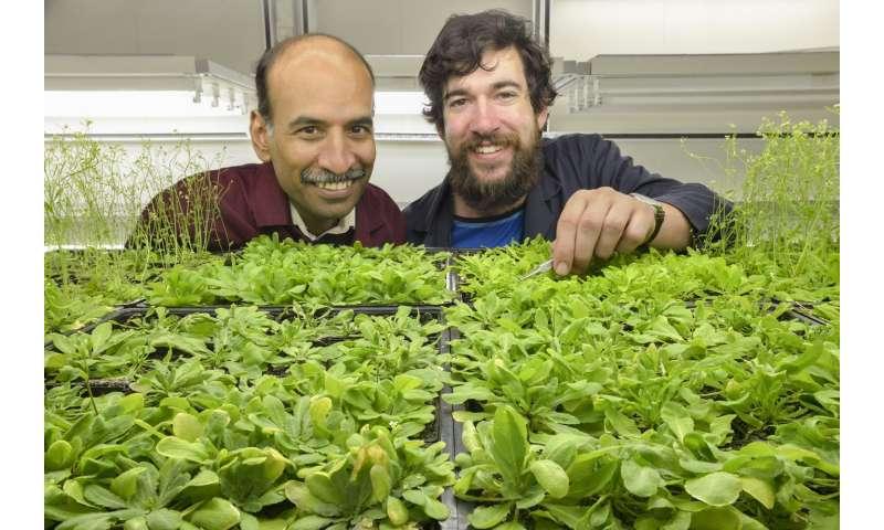 Mecanismo descubierto para que las plantas regulen su floración en un mundo en calentamiento