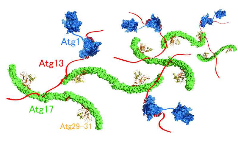 Mechanism of autophagy initiation has just been revealed