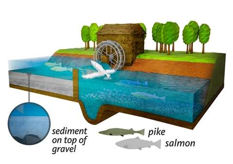Medieval water power initiated the collapse of salmon stocks