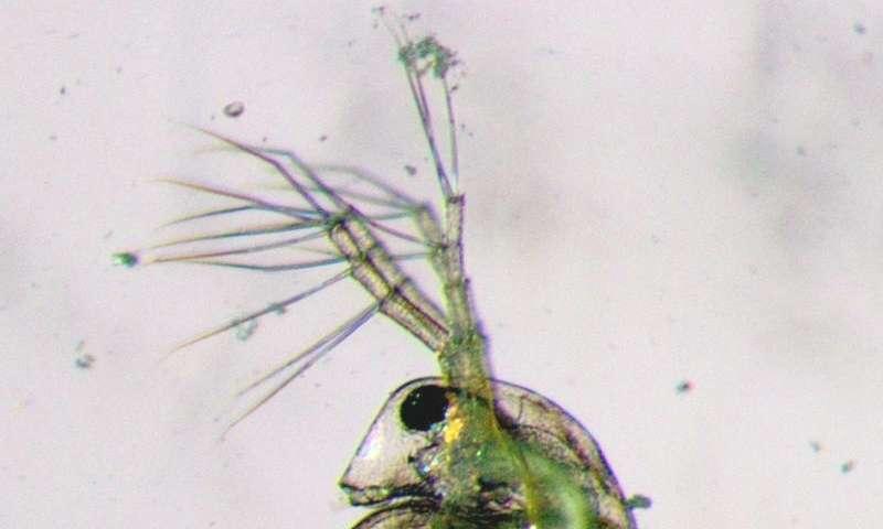 Microplastics harm freshwater fauna