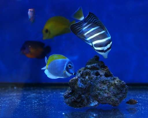 More than half of saltwater aquarium fish bought by researchers from US-based pet stores and wholesalers tested positive for cya