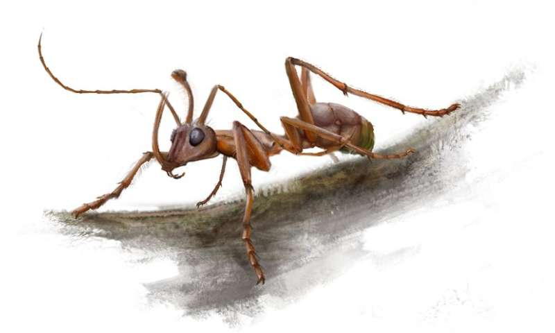 New Cretaceous fossils shed light on the early evolution of ants