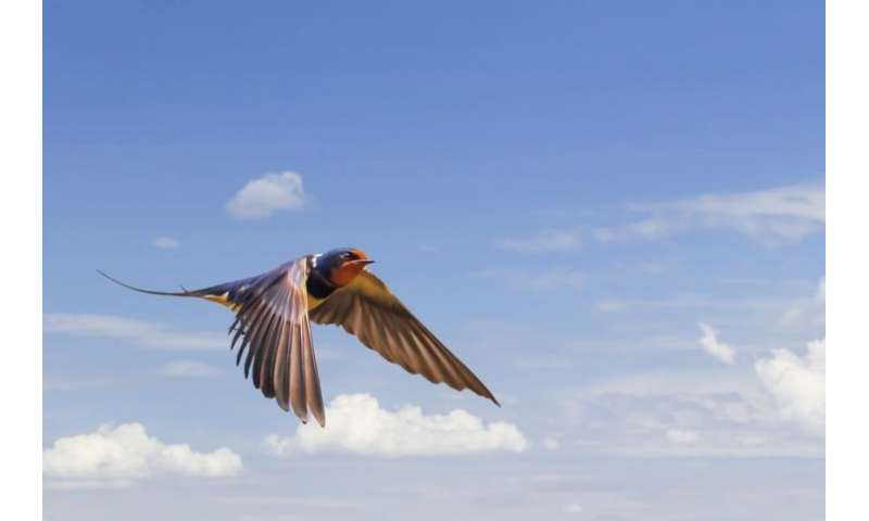New evidence shows migrating birds are staying in UK longer
