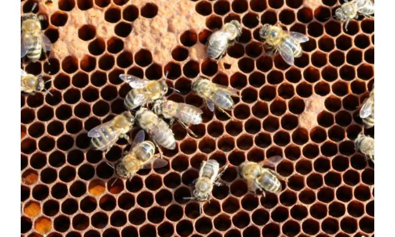 New findings about the deformed wing virus, a major factor in honey bee colony mortality