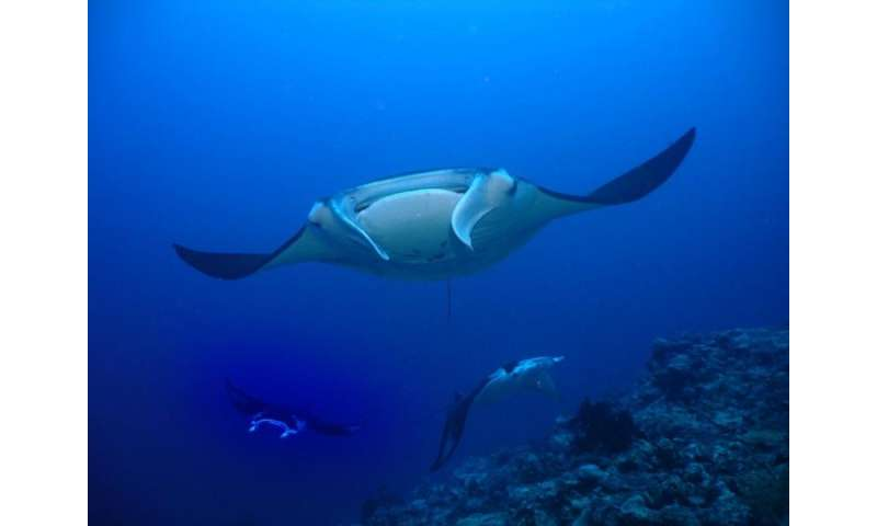 New global strategy to save sharks and rays
