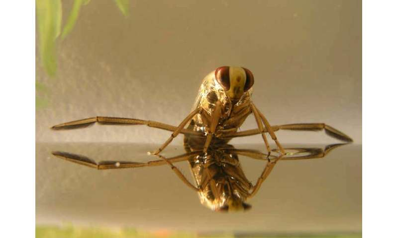New strategy to fight mosquitoes in a more efficient and sustainable way